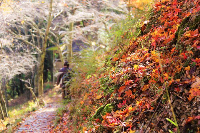 透き通る秋が美しい奥吉野!まるで別世界の静けさ