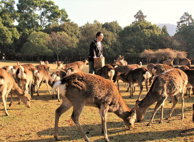 のんびり、のどかな奈良旅を楽しみましょう!