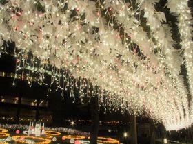 """""""冬の桜""""はずっと満開!大阪・桜ノ宮の「光のエレガンス」を楽しもう"""