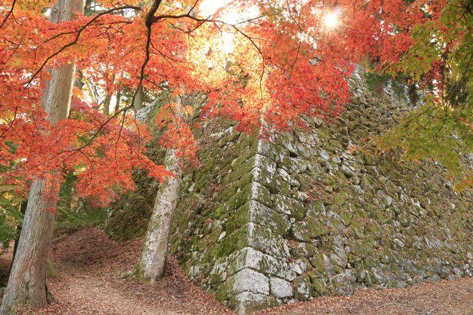 苔むした石垣、散紅葉も美しい