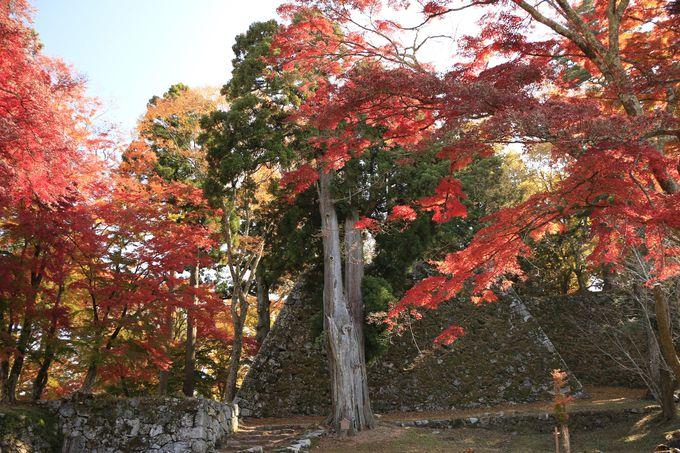 ラピュタの神殿!日本のミステリー