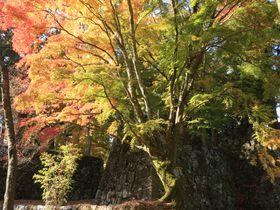 ラピュタの神殿!日本最大の山城!奈良県「高取城跡」へハイキング