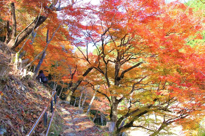 奈良・吉野山の紅葉時期・見ごろは10月下旬〜11月下旬