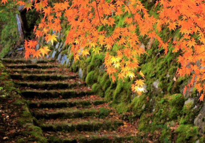 絶景の紅葉スポット!高城山展望台