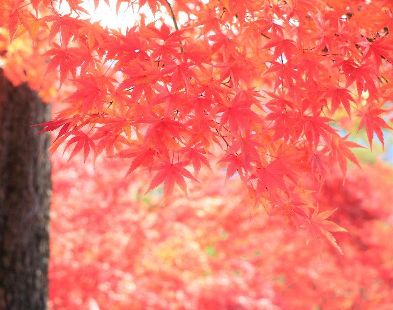 関西の紅葉穴場!西行も訪ねた!吉野観光はツウな旅人におすすめ