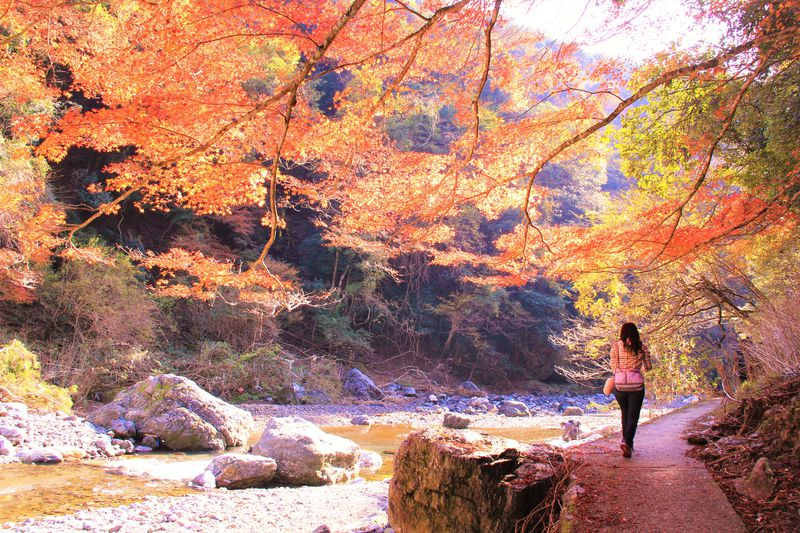紅葉の穴場スポット!「清滝&高尾」で京都観光&ハイキング