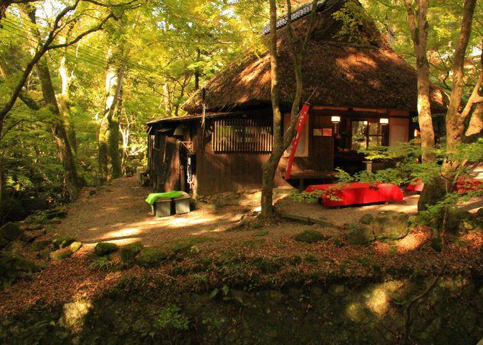 東大寺に近い紅葉穴場!奈良春日野国際フォーラム甍/水谷茶屋