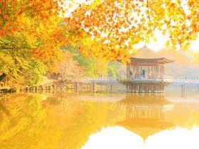 秋の奈良観光!紅葉名所&穴場スポット!紅葉時期・見頃は?