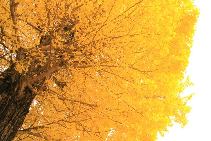 奈良公園でおすすめ!紅葉の穴場「手向山八幡宮」