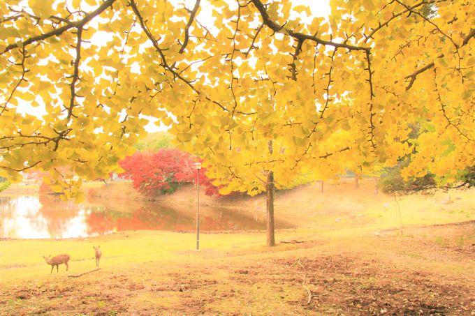 秋の奈良旅行!奈良公園の紅葉時期・見ごろは11月中旬〜12月上旬