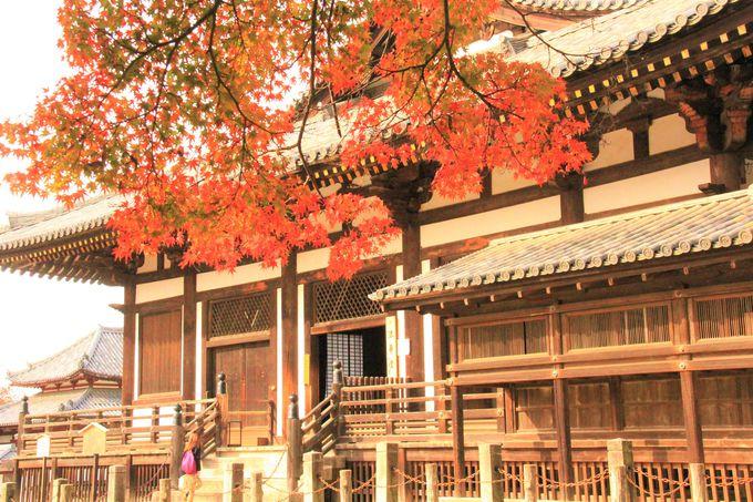 奈良公園おすすめの紅葉!若草山/法華堂(三月堂)/浮見堂
