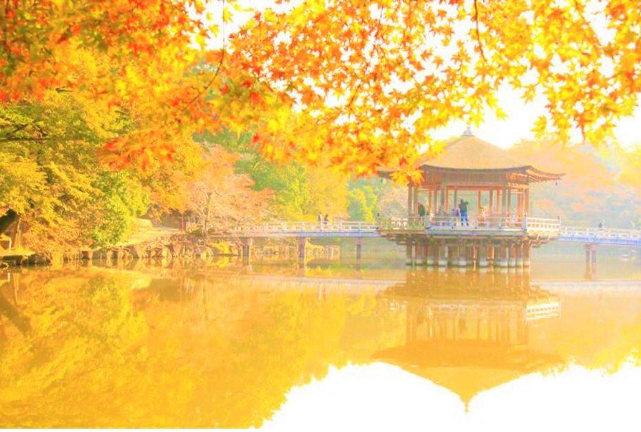 紅葉の見ごろが長〜い!奈良公園は、奈良屈指の紅葉スポット
