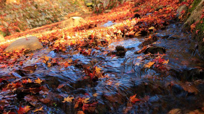 奈良公園の紅葉名所!吉城川