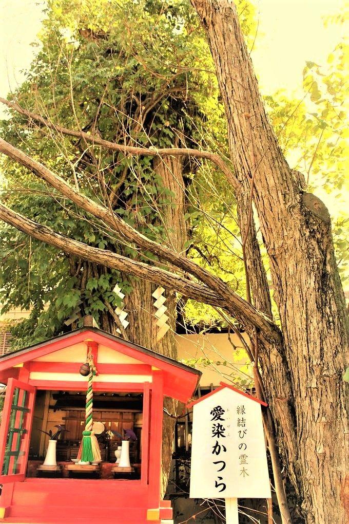 大阪のパワースポット〜良縁・縁結び編「お初天神(露天神)神社」「愛染堂」「鴫野神社(生國魂神社)」