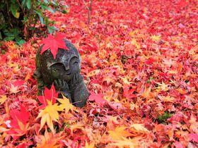 混雑は嫌!京都紅葉名所おすすめ!穴場の観光スポット15選
