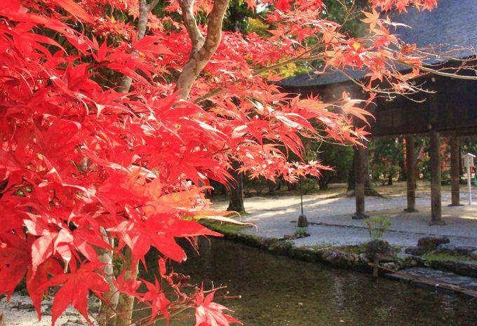 京都で無料の紅葉穴場スポット!上賀茂神社/下鴨神社/糺の森