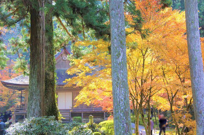 紅葉、桜の名所!京都・大原三千院