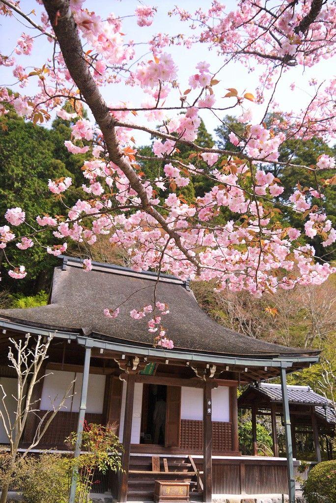 寂しそうな、ひっそりした寺院〜京都・大原「寂光院」