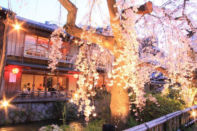 早咲きの桜!3月に桜が楽しめる京都の観光名所「平野神社」「醍醐寺」「祇園白川」