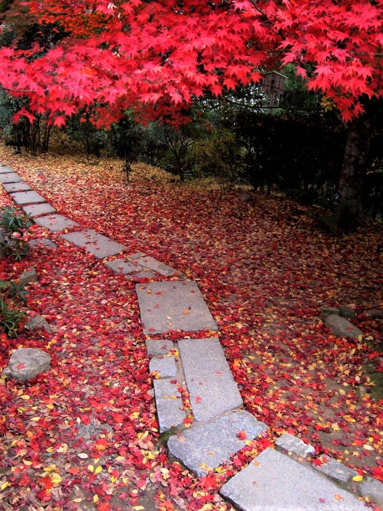 京都・紅葉の穴場・直指庵 「想い出草観音像」の微笑も優しげ