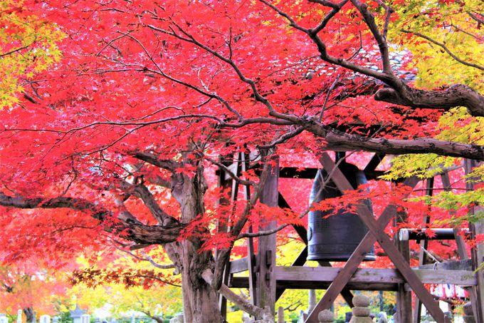 京都観光の穴場!奥嵯峨野の「化野念仏寺(あだしのねんぶつじ)」