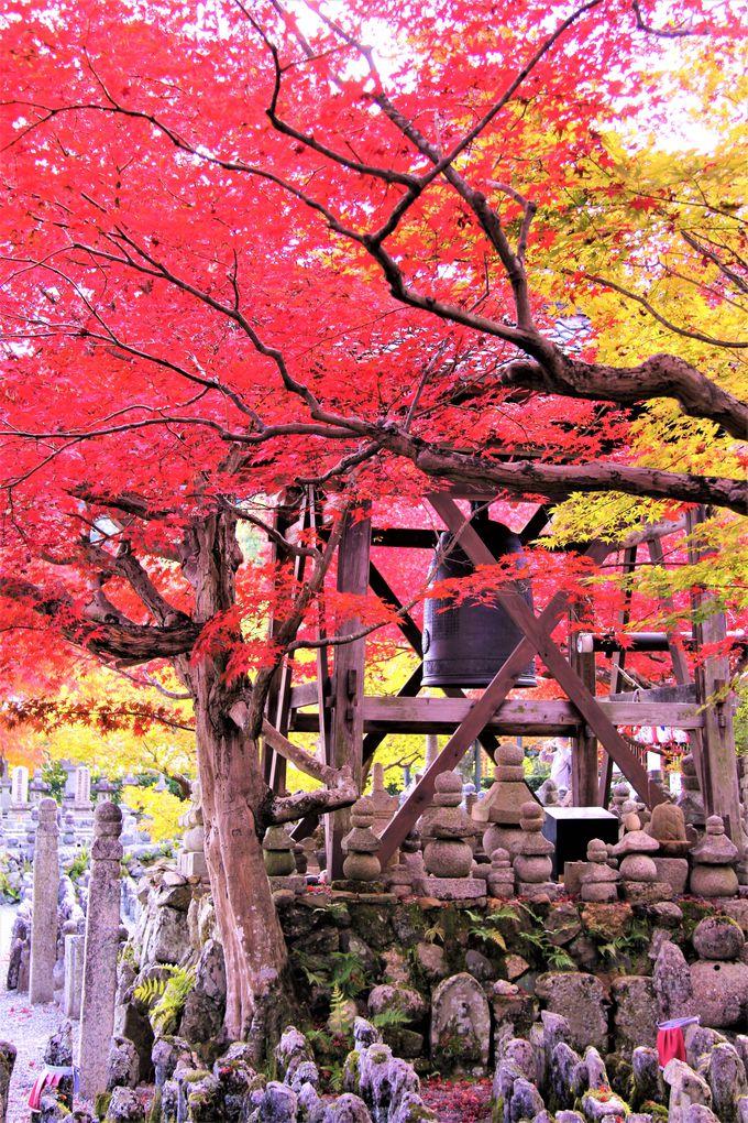 紅葉の穴場スポット!千灯供養も幽玄の美しさ「化野念仏寺」