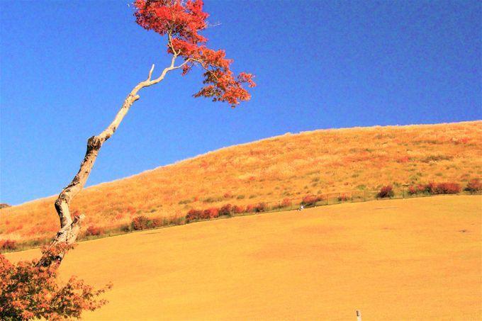 古都の静けさ感じられるハイキングコース!「手向山八幡宮」「若草山」「水屋茶屋」