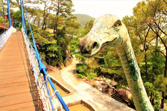 ベトナムで元気がもらえる!奇妙で楽しい森の動物たち