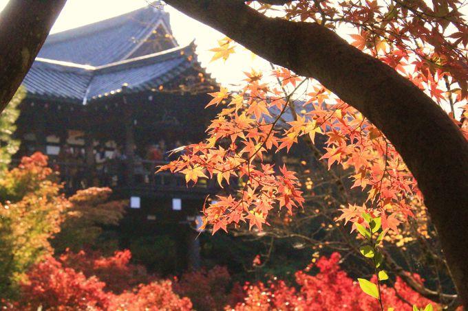 混雑しても行きたい!京都紅葉の名所、永観堂/嵐山/東福寺