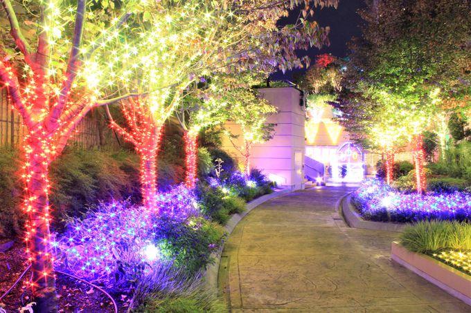 開催期間が長い!「なんばパークス」(Namba Parks)の美しいイルミネーション