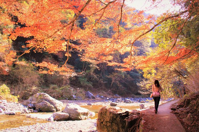 「錦雲渓(清滝)」「神護寺」「西明寺」「高山寺」〜紅葉も美しい!清滝川・高尾ハイキングコース