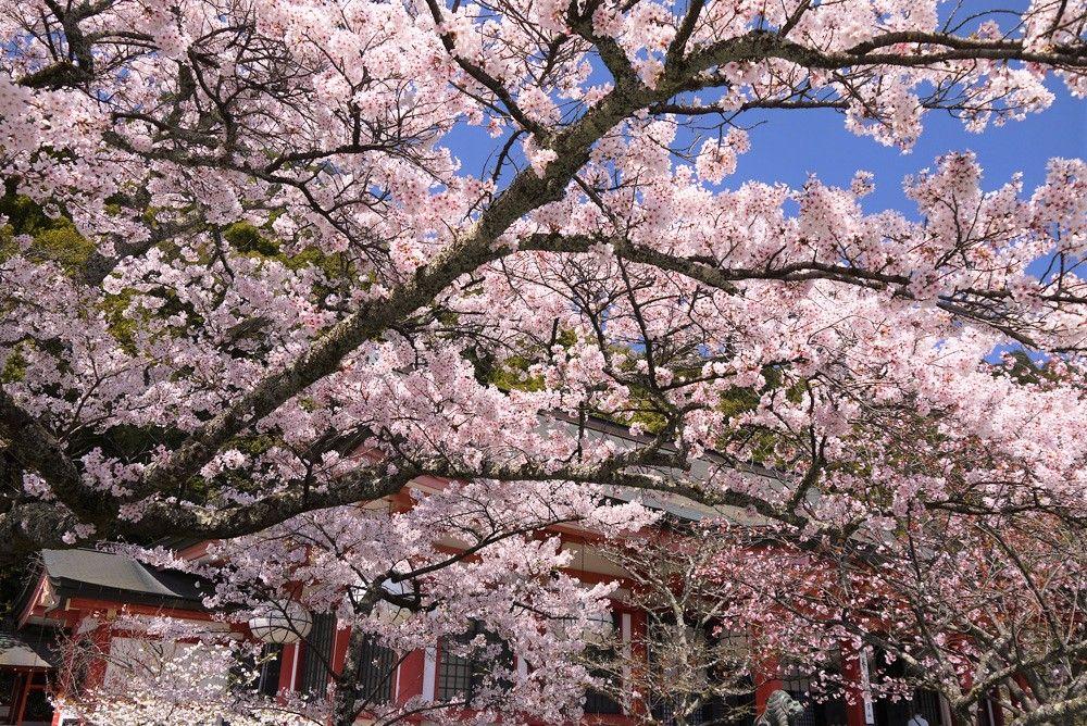 京都最強のパワースポット!「鞍馬寺」(金堂)の六芒星(金剛床)