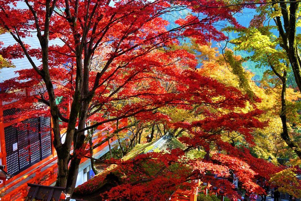 京都の最強パワースポット!「鞍馬寺〜貴船神社」ハイキングへのアクセス、行き方