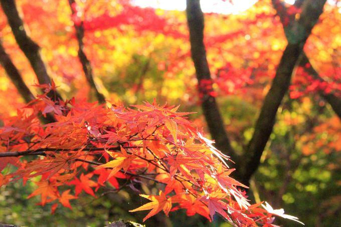 京都・東福寺の見どころ&おすすめ観光スポット