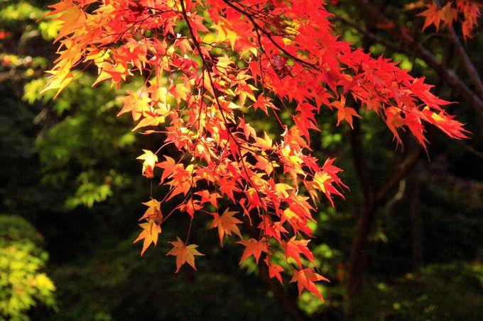 京都「東福寺」へのアクセス・行き方、紅葉の見ごろ・時期は?