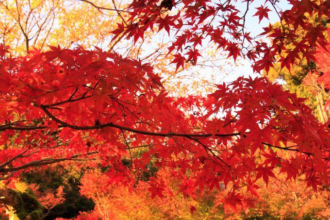 こちらも東福寺の紅葉穴場!厄除け運気アップのパワースポット!「今熊野観音寺」