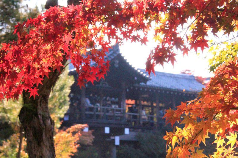 京都の紅葉名所「東福寺」はおすすめ!紅葉の見ごろ&穴場スポットは?