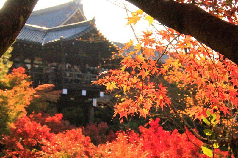 インスタ女子におすすめ!フォトジェニックな京都観光スポット