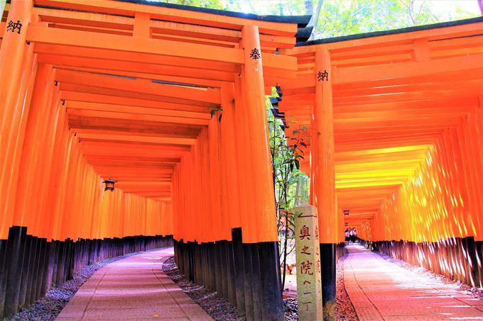 京都らしい神秘的な世界観!伏見稲荷大社/高台寺/圓徳院