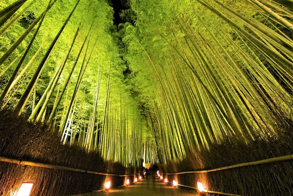 桜、ライトアップも!知恩院/竹林の道/八阪の塔(法観寺)