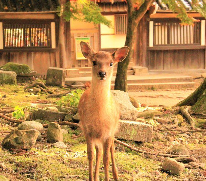 奈良公園は心なごむ観光スポット!「夫婦大国社」と「氷室神社」も人気
