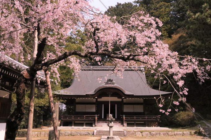 西行終えんの地「弘川寺」への行き方、アクセス、駐車場は?
