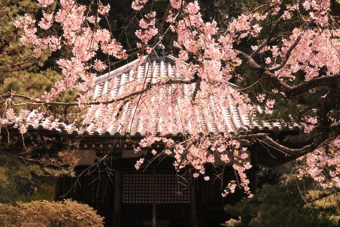 桜山や紅葉谷!美しい自然のパワースポット、弘川寺