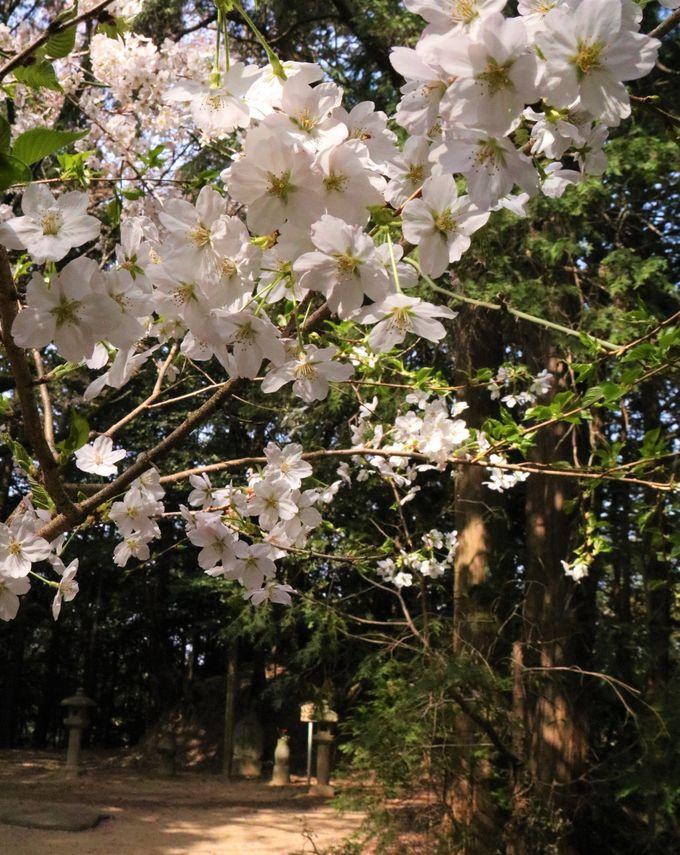 歌人・西行法師の終えんの地、弘川寺
