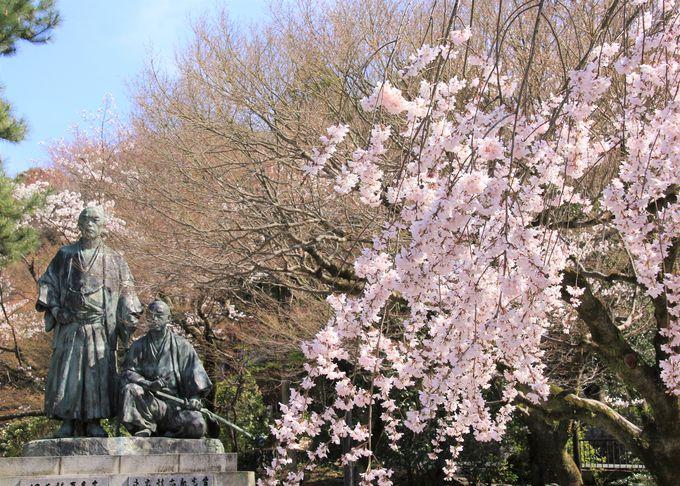 """""""祇園の夜桜""""で知られる円山公園"""