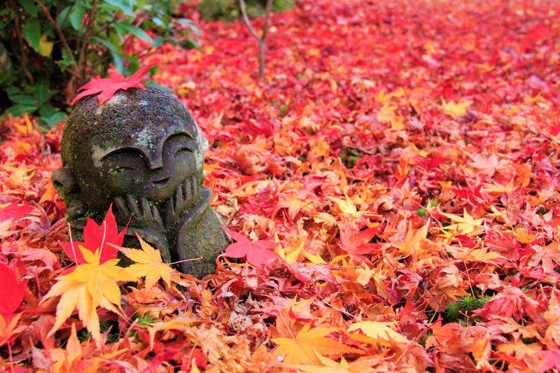 京都観光の穴場!旅行者向きのミステリー&ディープスポット15選