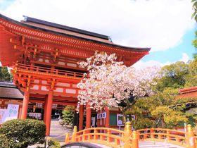 違いを知れば楽しい!京都最古の上賀茂神社×下鴨神社で最強パワースポット巡り