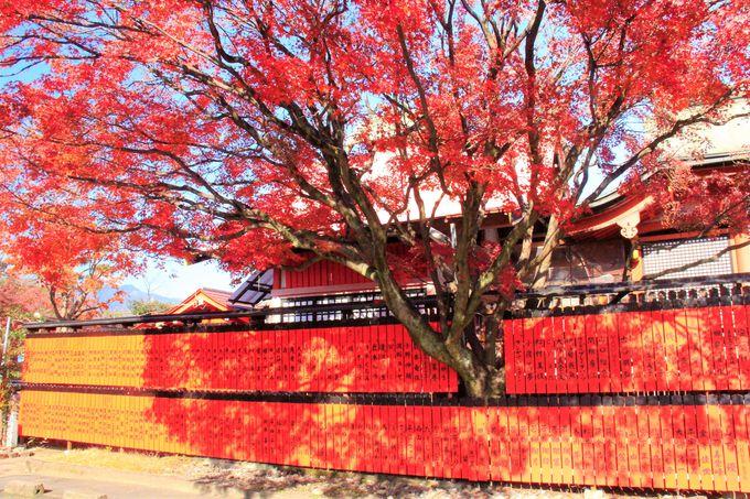 嵐山・嵯峨野の隠れた紅葉穴場!鹿王院/車折神社/大覚寺