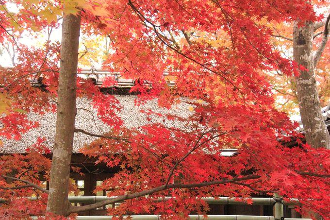 嵐山の紅葉スポット!渡月橋/天龍寺/宝厳院