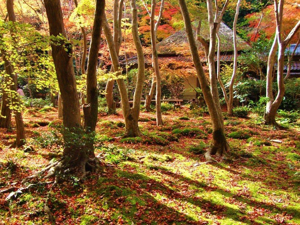京都嵐山・嵯峨野の紅葉名所!常寂光寺/二尊院/祇王寺